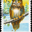 Stock Photo: USA - CIRCA 1978 Great Horned Owl