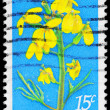 USA - CIRCA 1979 Wallflower - Stok fotoraf