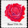 USA - CIRCA 1981 Rose - Stok fotoraf
