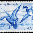 USA - CIRCA 1984 Mallards — Stock Photo