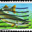 USA - CIRCA 1986 Muskellunge - Stock Photo