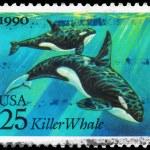 Постер, плакат: USA CIRCA 1990 Killer Whale