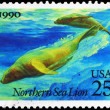 USA - CIRCA 1990 Sea Lions — Stock Photo