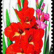 US- CIRC1994 Gladiola — Stock Photo #12383024