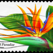 USA - CIRCA 1999 Bird of Paradise — Stock Photo