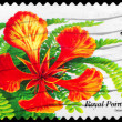 USA - CIRCA 1999 Royal Poinciana - Stock Photo
