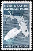 USA - CIRCA 1947 White Heron — Stock Photo