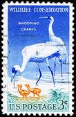 USA - CIRCA 1957 Cranes — Stock Photo