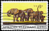USA - CIRCA 1969 Elephant Herd — Stock Photo