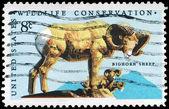USA - CIRCA 1972 Bighorn Sheep — Stock Photo