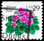USA - CIRCA 1990 African Violets — Stock Photo
