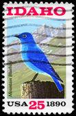 Usa - circa 1990 bluebird — Foto de Stock