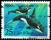 USA - CIRCA 1990 Killer Whale — Stock Photo