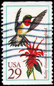 USA - CIRCA 1992 Hummingbird — Stock Photo