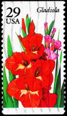 USA - CIRCA 1994 Gladiola — Stock Photo