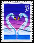 USA - CIRCA 1997 Swans — Stock Photo