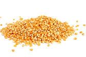 Pile of corn — Stock Photo