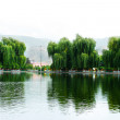 Willow trees at the lake — Stock Photo #10786419