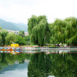 Willow trees at the lake — Stock Photo