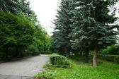 Chemin d'accès dans le parc — Photo