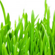 Spring grass close up — Foto Stock