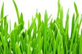 Trawa wiosna zbliżenie — Zdjęcie stockowe
