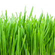 Fresh green grass — Stock Photo #11060067