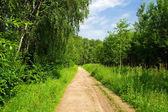 The road in the forest — Stock Photo