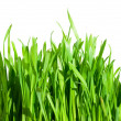 Fresh green grass — Stock Photo #11648854