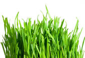 Fresh green grass — Foto Stock