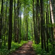 Green forest way — Stock Photo