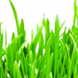 Fresh green grass — Stock Photo #11831393