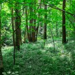 Green sunny forest — Stock Photo