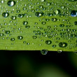 Close up view of the dew water drops on a plant — Stock Photo