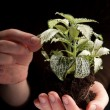 Green plant in female hands on black — Stock Photo
