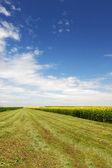 Green grass cuttings over deep blue sky — Stock Photo