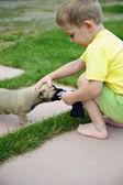 Malý chlapec hraje s jeho roztomilý pes — Stock fotografie
