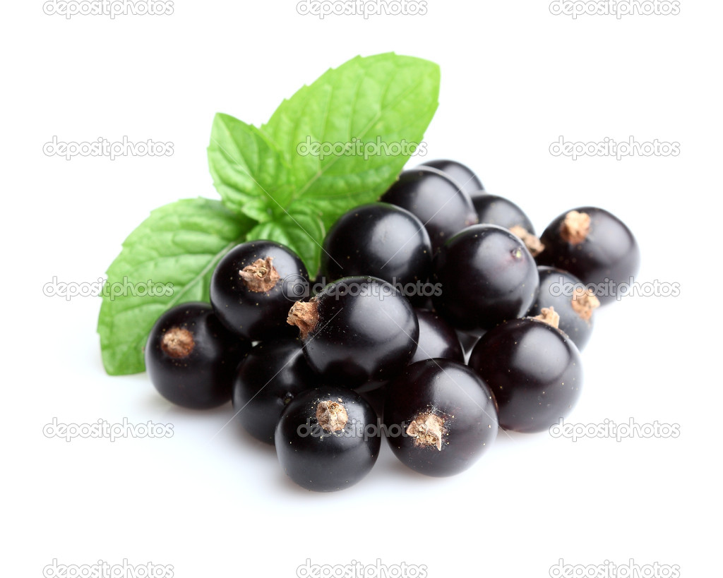 Blackcurrant with mint — Stock Photo #11226814