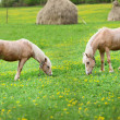 Two horses graze in a meadow with haystacks — Stock Photo