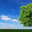 Large tree among the meadows — Stock Photo