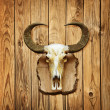 Buffalo skull on wooden wall — Stock Photo