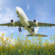 Aircraft takes off over the meadow — Stock Photo #11307622