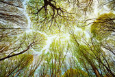 Trees in the forest - leaves against the sky — Stock Photo