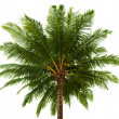 Stock Photo: Top of the coconut palm isolated on white