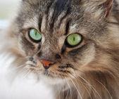 Ordinary cat — Stock Photo