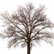 Stok fotoğraf: Silhouette of tree on white background