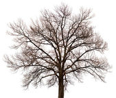 Silhouette of a tree on white background — Stock Photo