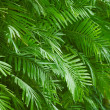 Palm foliage background — Stock Photo #12210209