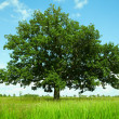Stock Photo: Tree in field