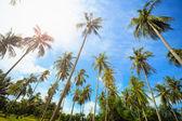 Coconut palms park — Stockfoto